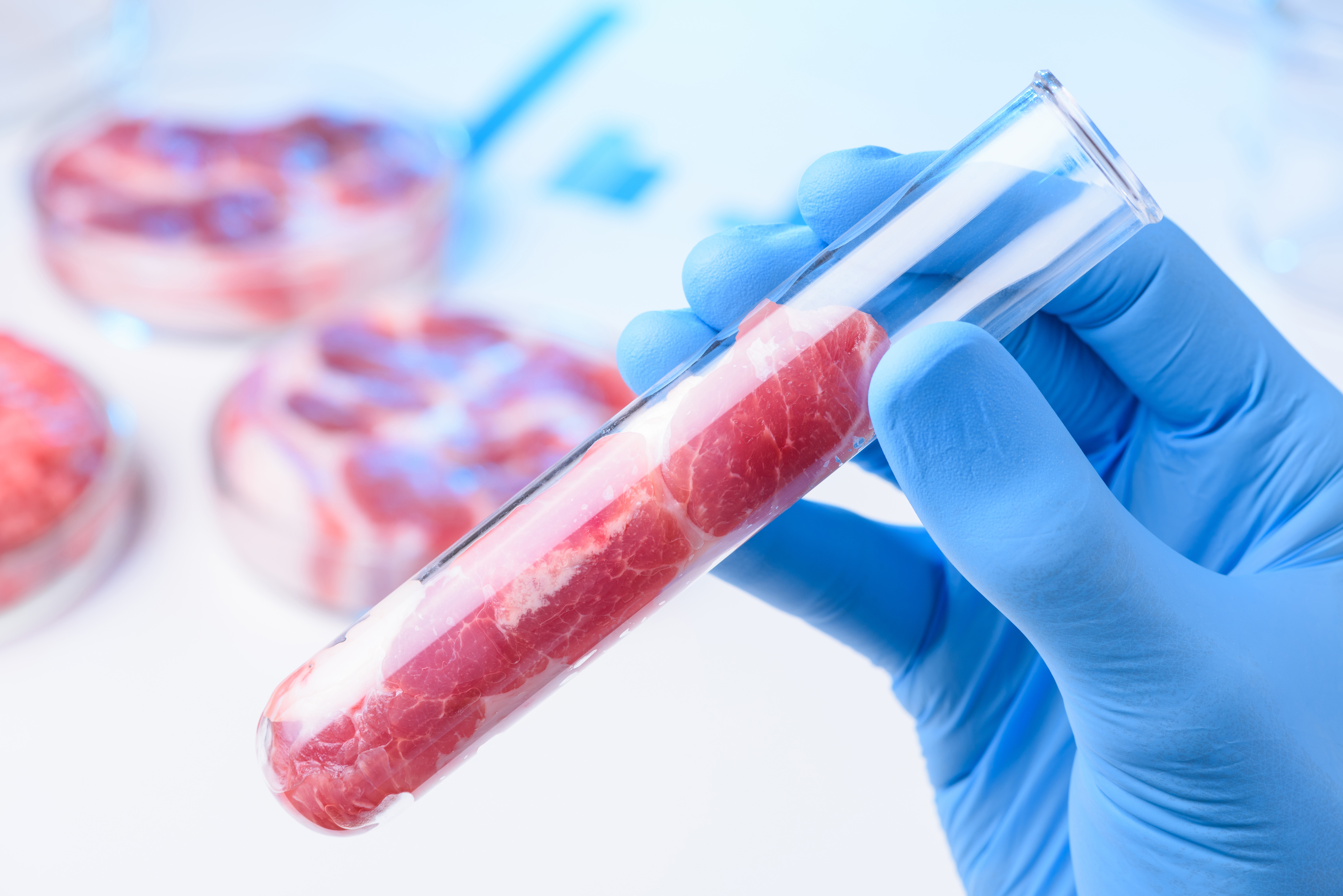 Innovative Research Program for the Development of a Digital Platform of Microbiological, Chemical and Multispectral Data Concerning the Safety and Quality of Food